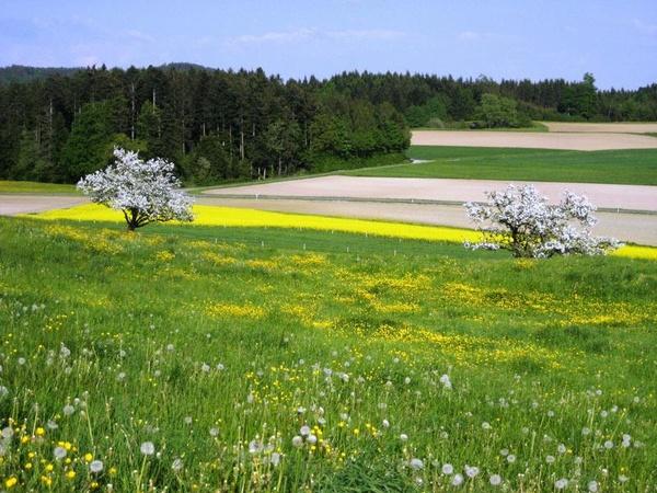 600x450_schlierbach_landschaft-fruehling